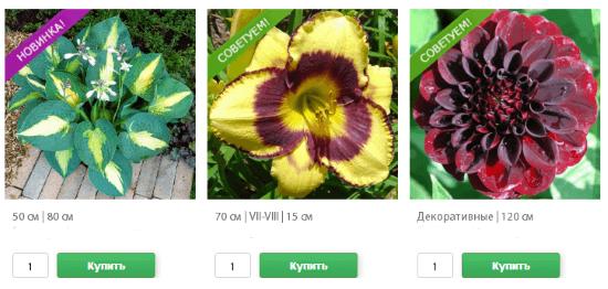 Цветочные семена