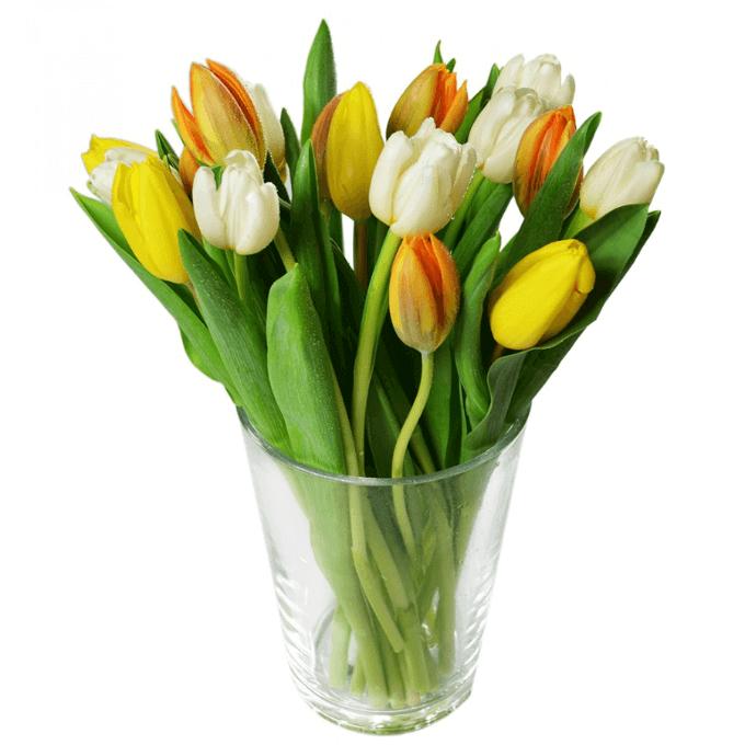 Tulipány na Kvetinyexpres.cz