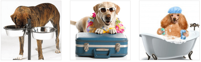 Doplňky a hračky pro psi za nízké ceny