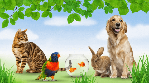 Futter für Katzen, Hunde und Kaninchen bei zooplus