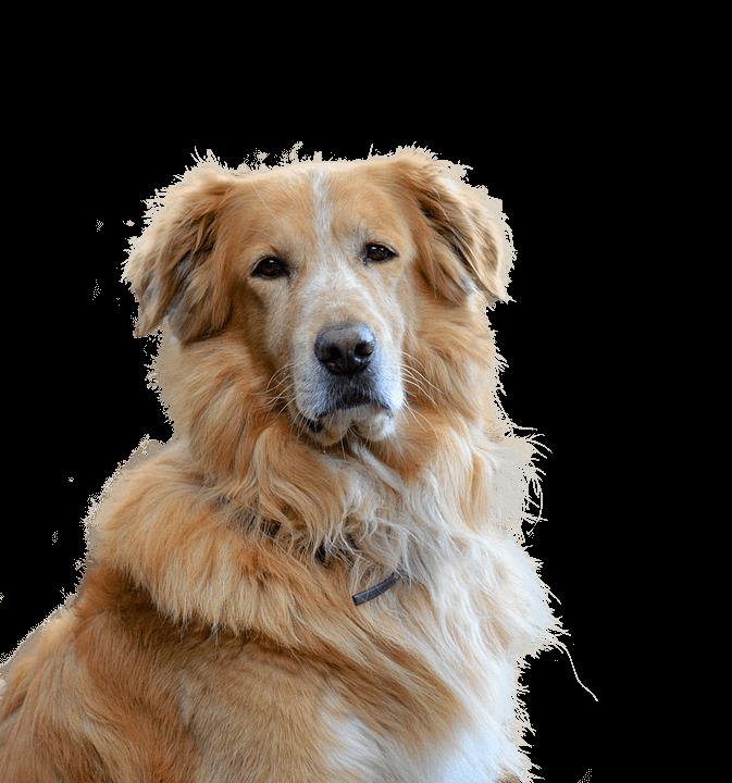 centrumzoo kutya