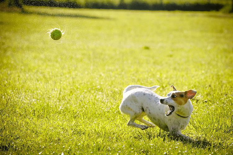 zooplus kutya