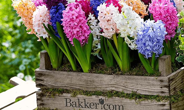 banner fiori