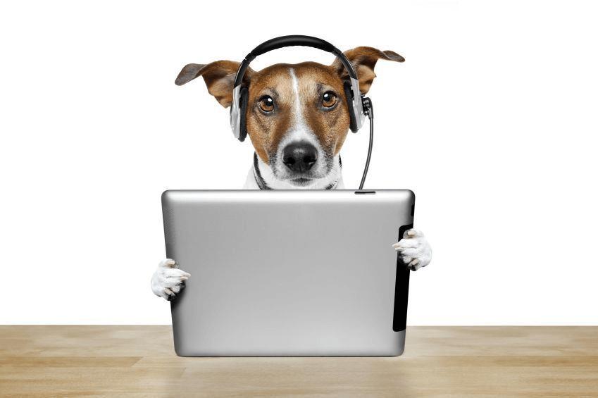 assistenza clienti cane