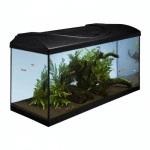 acvariu cu peștii