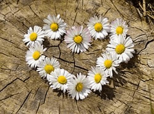 kvety vzdy potesia