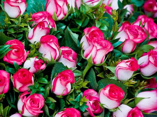 Vyjadri svoje pocity pomocou kvetov