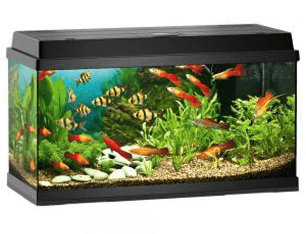 Hľadáte nové akvárium? Kliknite na zoohit.sk a isto si vyberiete